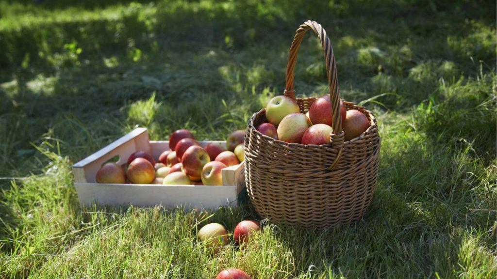 appels bevatten veel voedingsvezels welke goed zijn voor een strakke buik